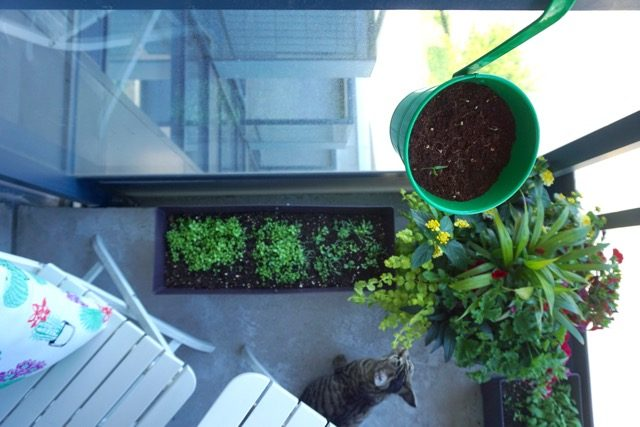 Easy Condo Garden planters Canadian Tire chili peppers