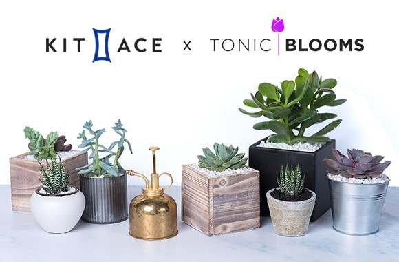 kit-and-ace-tonic-blooms-succulent-pop-up